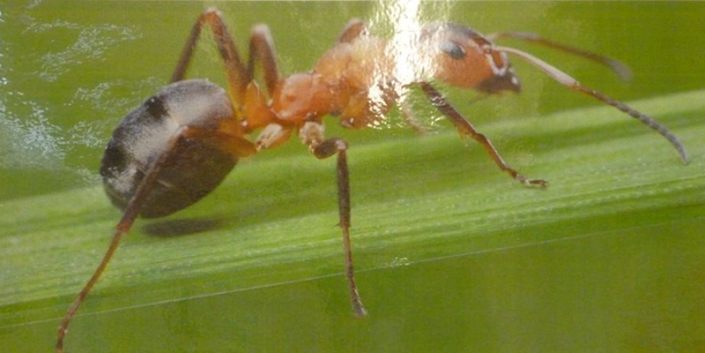 """Alvin the ant says """"Be Co Operative"""""""